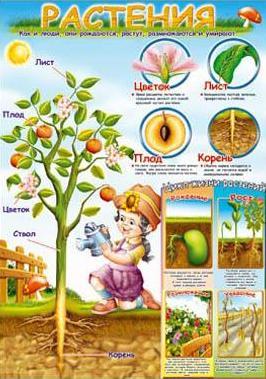 Плакат Растения