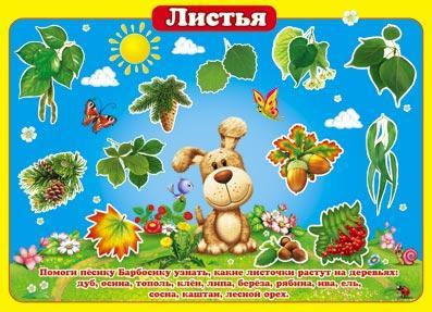 """Плакат """"Птицы всего мира""""; """"Листья"""" Мир открыток"""